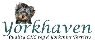 Yorkhaven Yorkshire Terriers